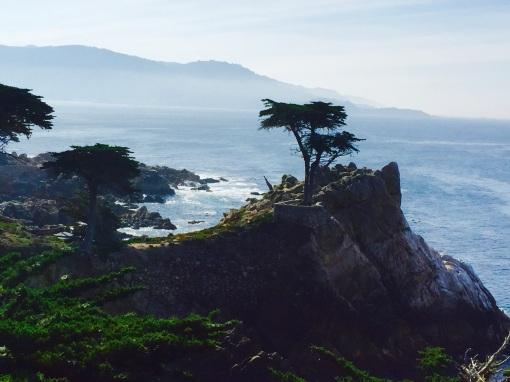 The famous lone cypress tree in Carmel, California
