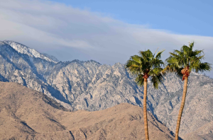 Palm Springs Palms Linda Tanner http---www.flickr.com-photos-goingslo-6326261552-